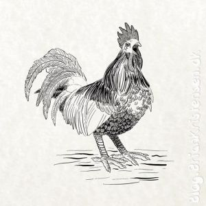 How to Draw a Rooster - Sketch 210