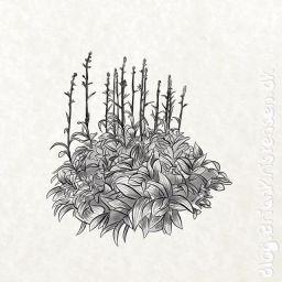 Sketch 0225
