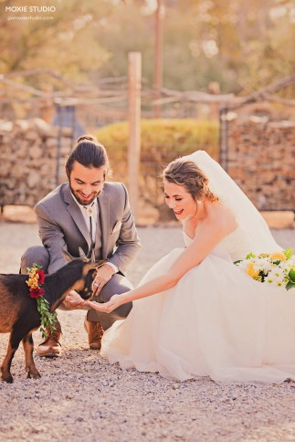 Bride & Groom and the goat at The Farm by Moxie Studio