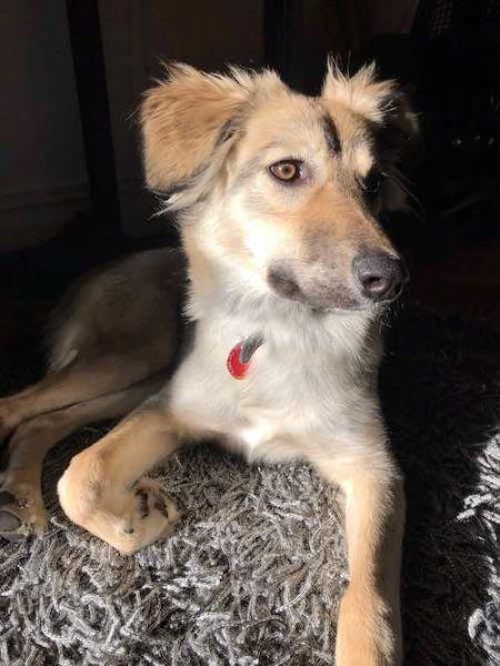 Uday's dog, Lola