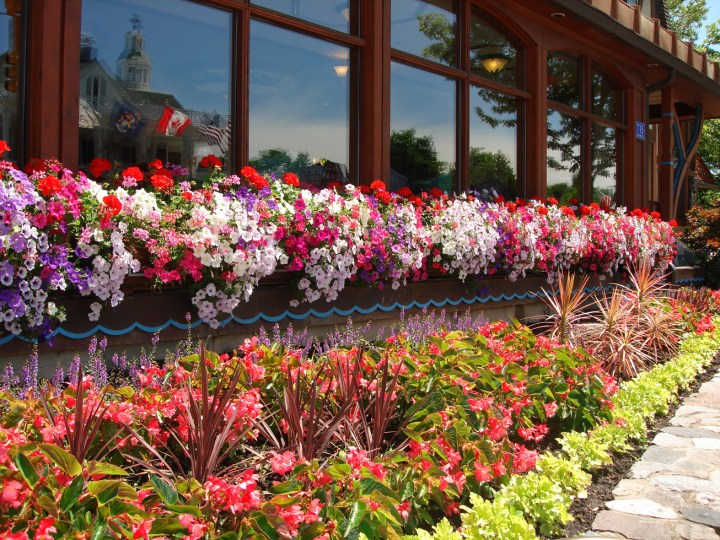 Flowers In Frankenmuth, Bavarian Inn Restaurant