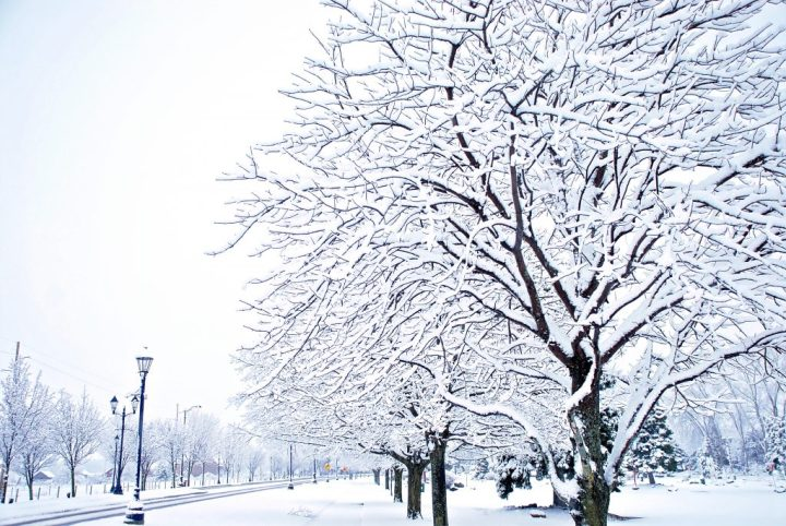 Snowy Trees On Weiss Street In Frankenmuth, Michigan