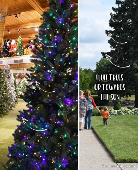 """Artificial Christmas Tree branches should be fluffed up, """"growing towards the sun."""""""