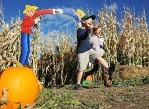 Weiss Centennial Farm Corn Maze