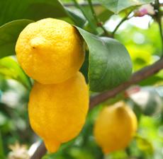 Pure-Lemon-Essential-Oil__32763.1428438919.1280.1280