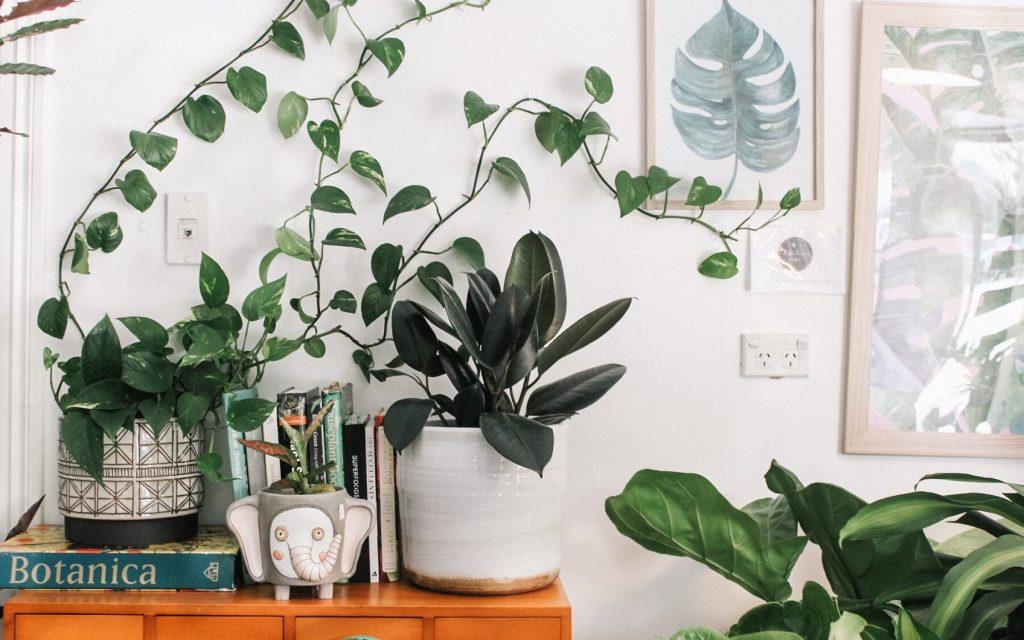 Bureau à domicile : de la verdure pour un meilleur environnement de travail