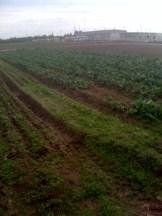 Farm to School Manteca California