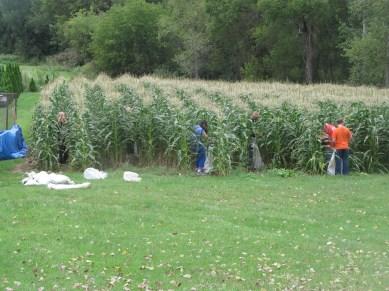 FFA Sweet Corn Plot