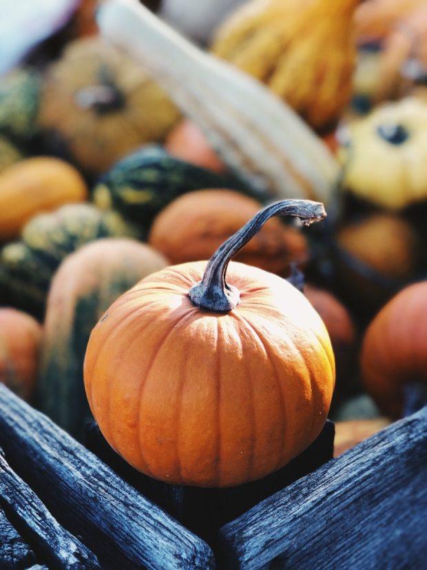delicious pumpkin recipes for Fall