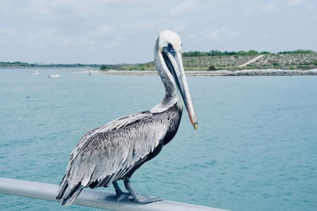 camping in florida by the ocean with a pelican watching