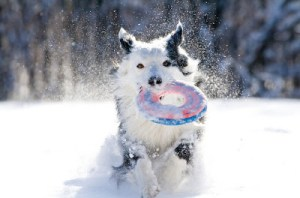 Playtime in the snow!