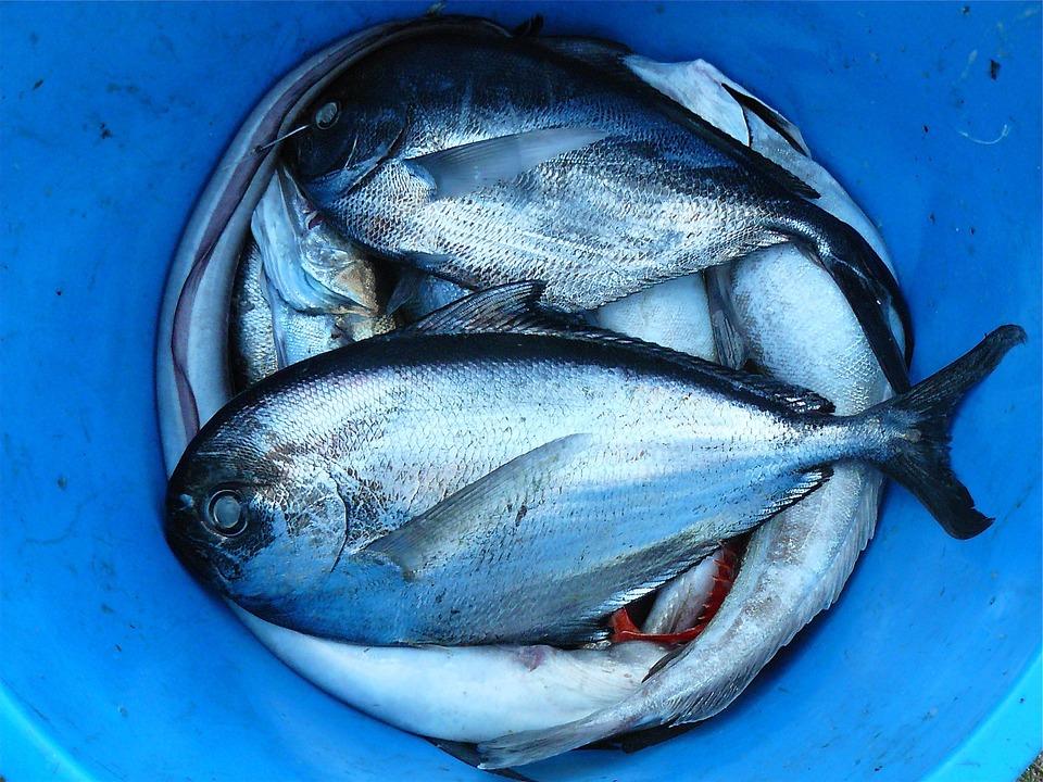 pesce taroccato
