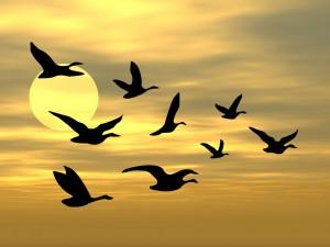sky and birds screensaver
