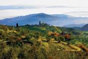 Vino di Carmignano, un grande rosso toscano