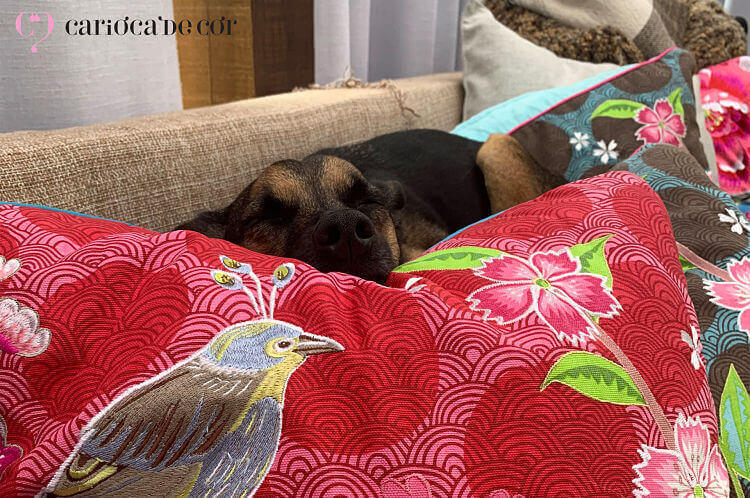 cachorra dormindo nas almofadas da pip