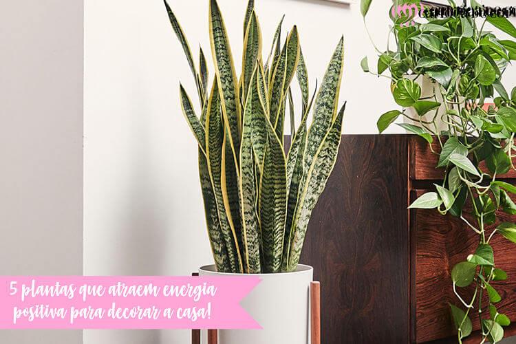 plantas que atraem energia positiva para decorar a casa