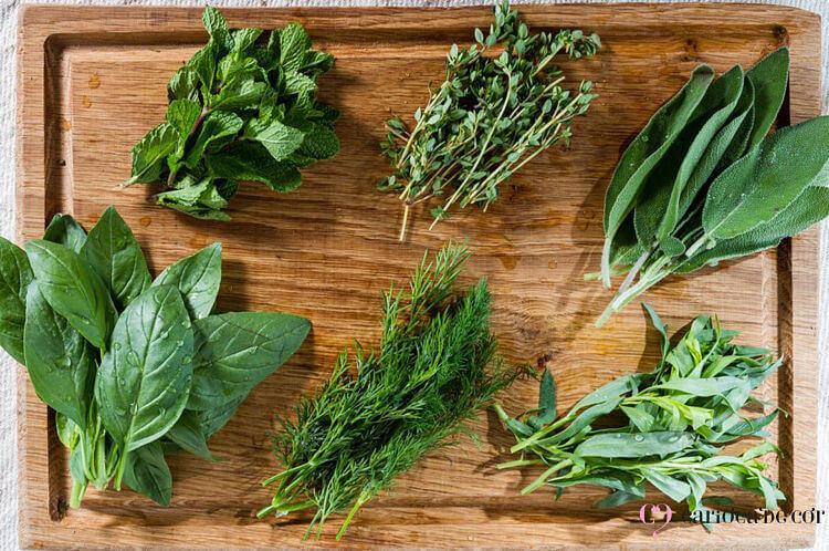 temperos orgânicos para plantar em asa