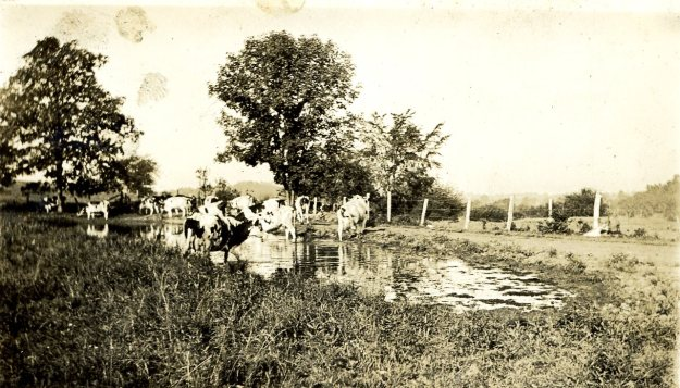 The cow pond in 1924