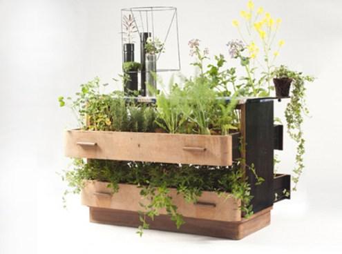 giardini in casa: un vecchio comò con tante piante al suo interno