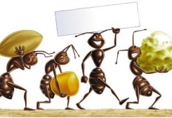 formiche-in-casa