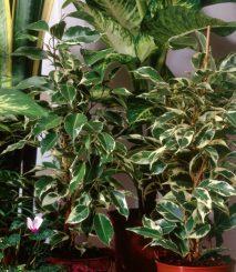 piante-da-appartamento1