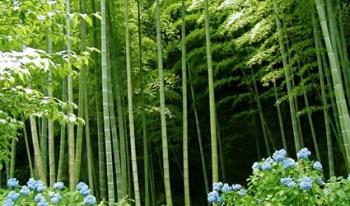 pavimenti_in_bambu_sostenibile