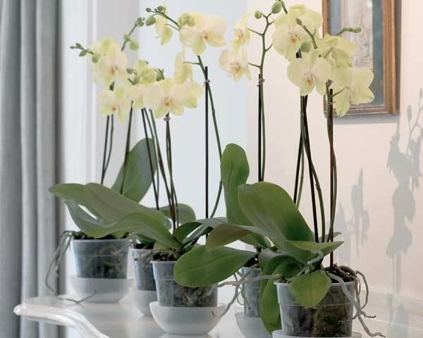 Come innaffiare le piante in estate   CasaNoi Blog