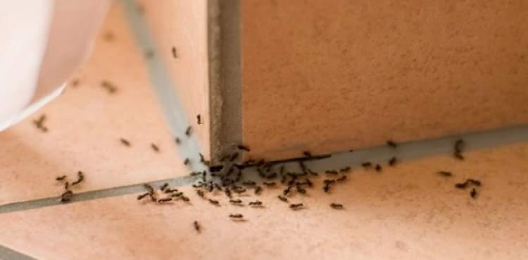 Come tenere lontane le formiche da casa casanoi blog - Le formiche in casa ...