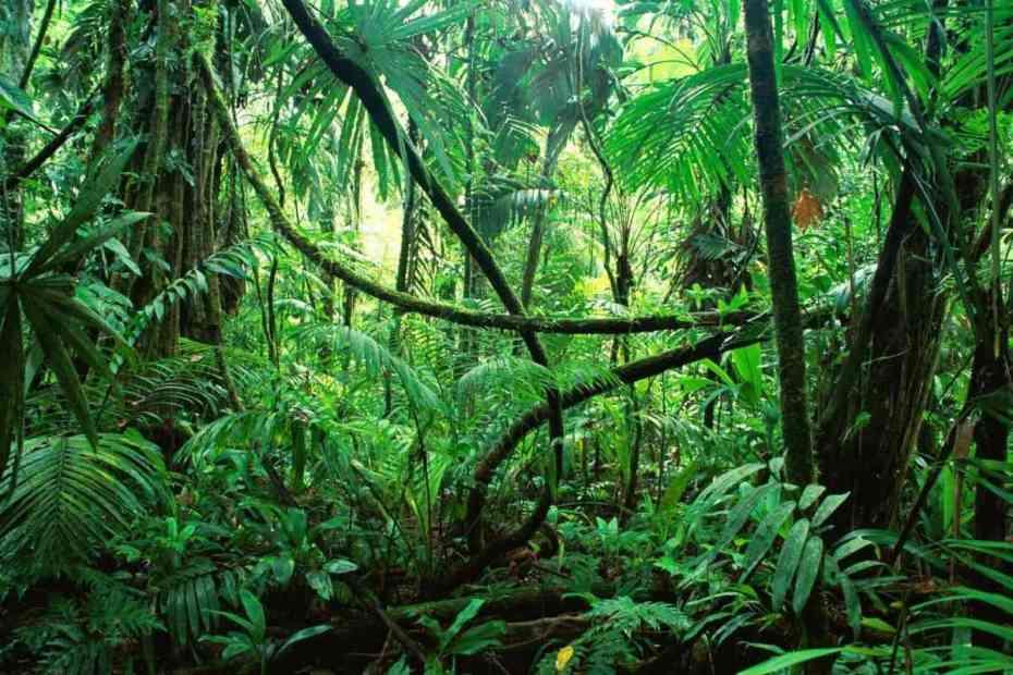 La selva maya.