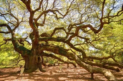 Le chêne de charpente