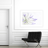 Lily of the Nile No. 1 - Large scale purple flower art print by Cattie Coyle Photography