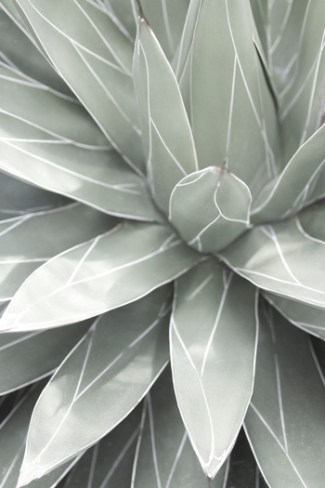 Queen Victoria Agave by Cattie Coyle Photography