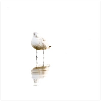 Seagull No 4 - Bird photography art print by Cattie Coyle Photography