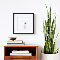 Seagull No 5 - Minimalist bird print by Cattie Coyle Photography
