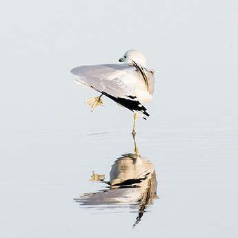 Seagulls - Bird photography art prints by Cattie Coyle Photography