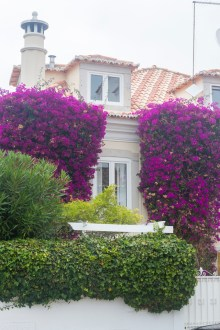 Bougainvillea by Cattie Coyle Photography