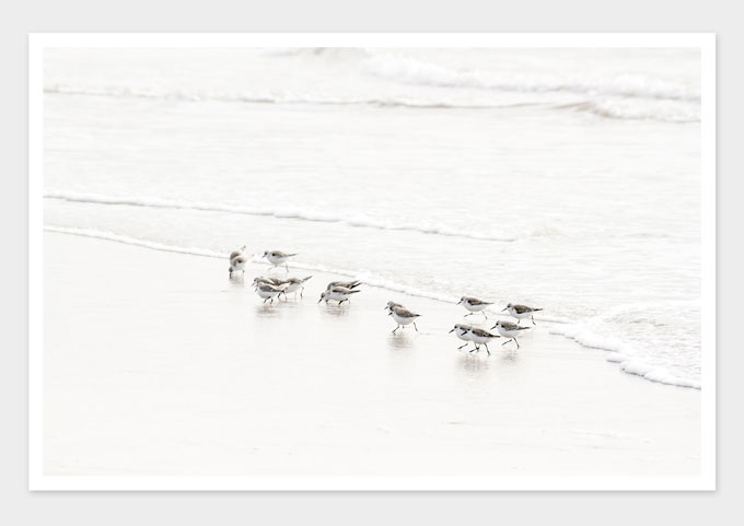 Sandpipers No 6 - Nature photography art prints by Cattie Coyle