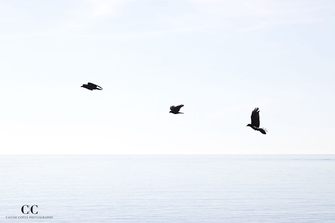 Riviera Reverie: Three Birds by Cattie Coyle Photography