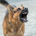 【セブ島】狂犬病に発症するとほぼ100%死亡!予防方法と注意事項
