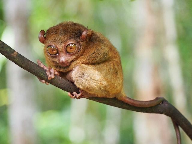 フィリピンの珍しいユニークな動物9選【貴重でレアな生き物】