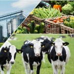 Investing In The Agriculture Sector