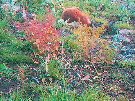 bear cub2
