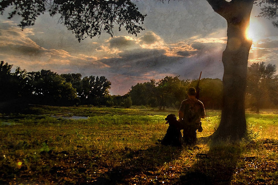 Image is a painting of a man and a dog in a field waiting to shot doves.