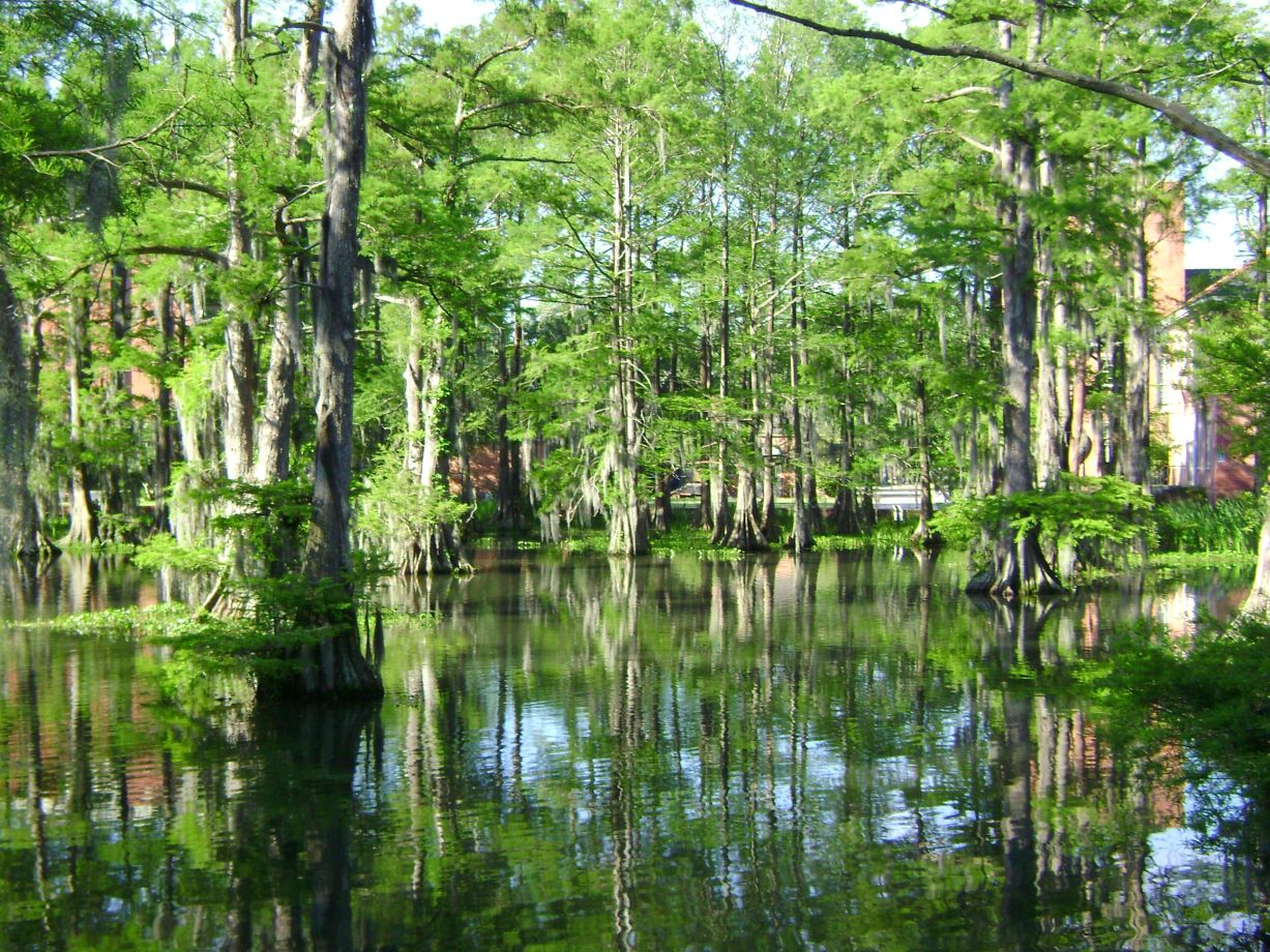 A swamp in summertime
