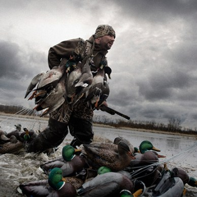 Hunter carrying an armful of duck decoys through the shallows