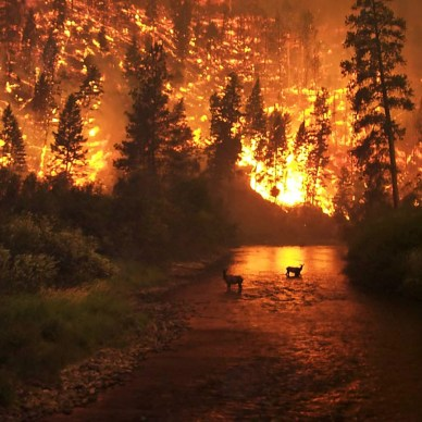 Picture shows a wildfire burning the background, with two deer standing in a body of water.