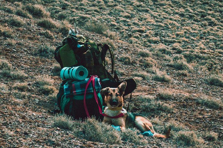 camping supplies - backpacks