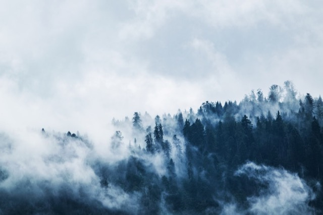 mist on treetops
