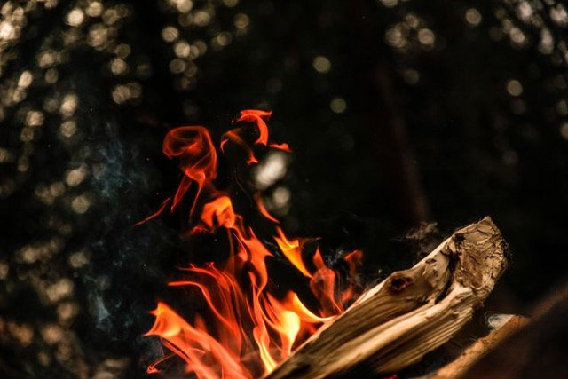 fire on wood in forrest