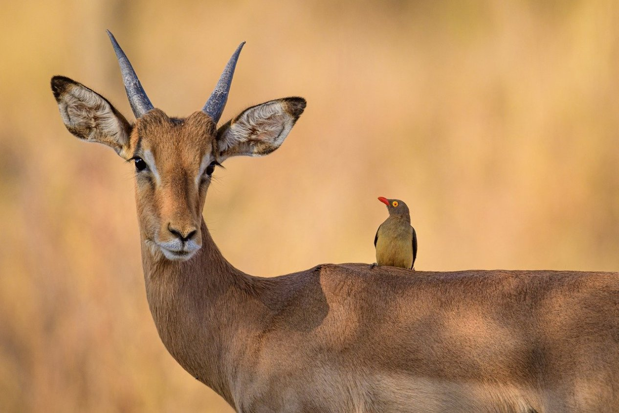 african safaris best guns
